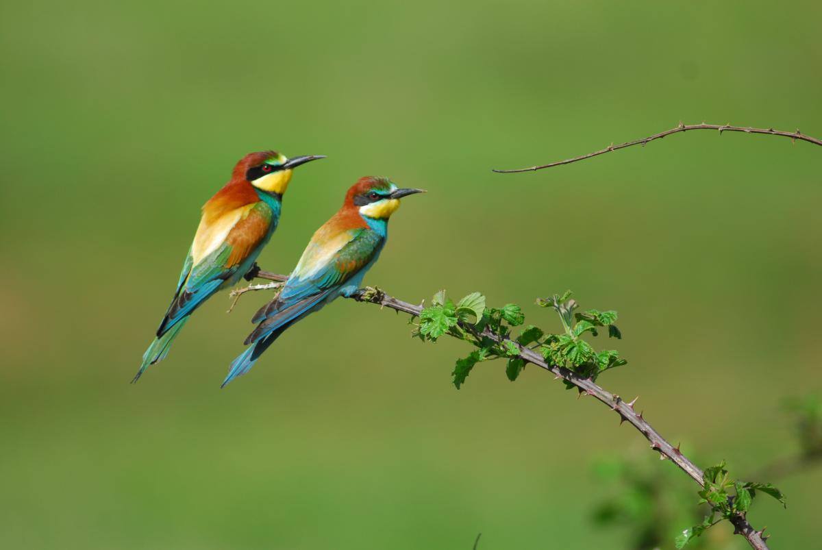 The bee-eater would benefit from restored river banks © A. Vorauer