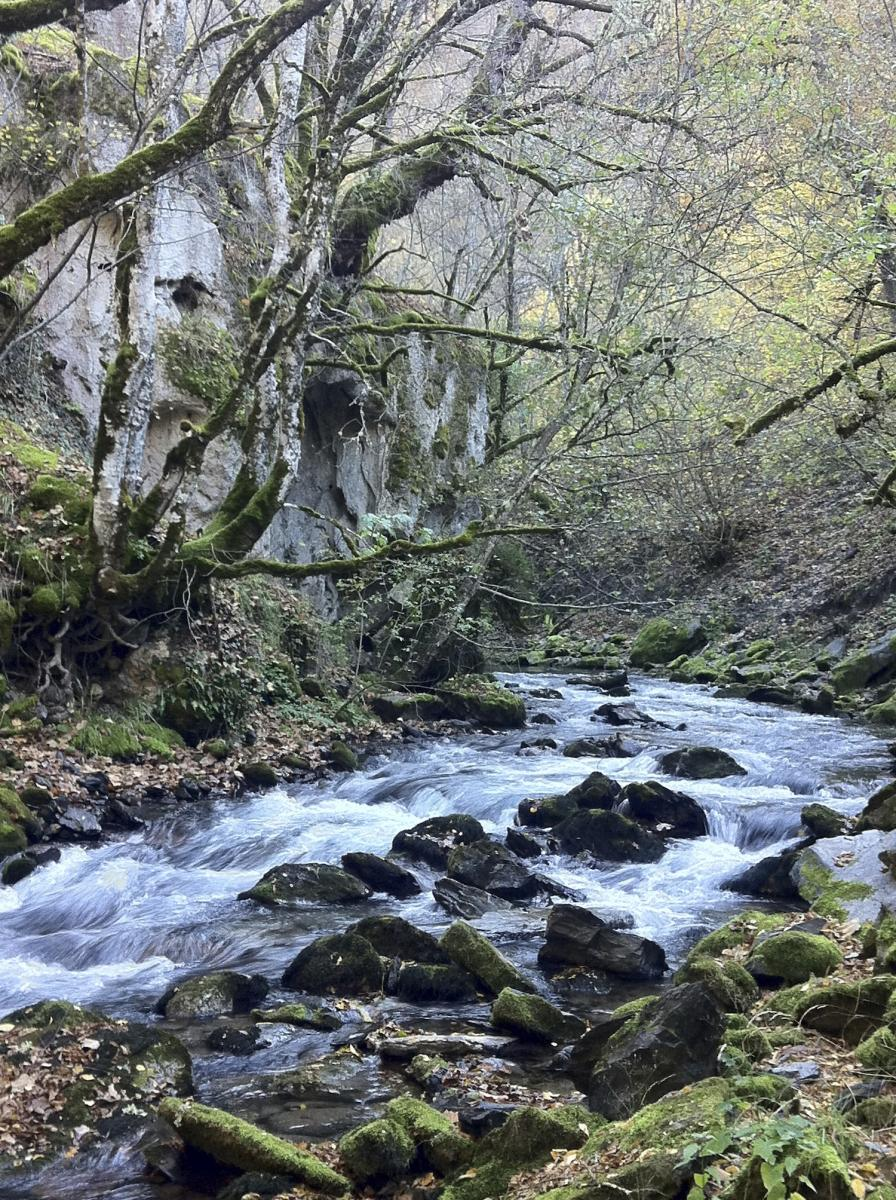 Mala River that would be affected by the HPP Boskov Most in Mavrovo National Park. © EuroNatur