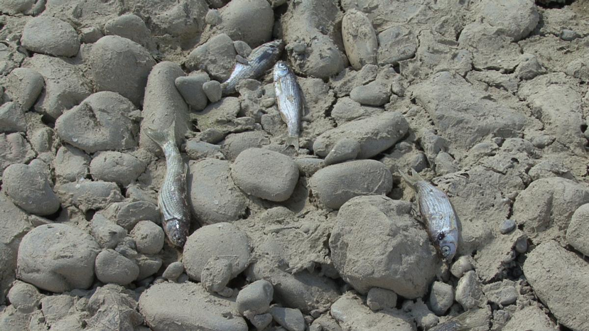 Shortly after the plant started operating in August 2016, a local conservation group found hundreds of dead fish in the river bed. © Association Egnatia