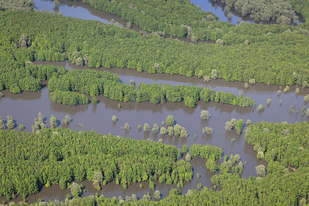 The floodplains of the Sava offer a unique potential for natural flood retention. © Goran Šafarek