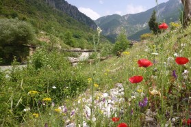 A beautiful wild flower slope above the Bence – a tributary to the Vjosa just below Tepelena.