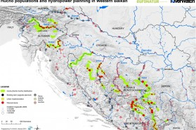 Dam threat: 93 hydropower plants are projected directly in river reaches supporting Huchen. 70 percent of the Balkan population would be lost. Prepared by Fluvius