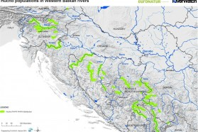 Oasis for the Huchen: the Balkans hosts the healthiest Huchen populations in Europe. Huchen can be found on a total stretch of 1,842 km in Balkan rivers. Prepared by Fluvius